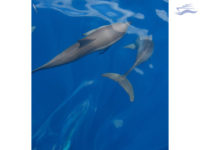 Maldivas Visita delfines