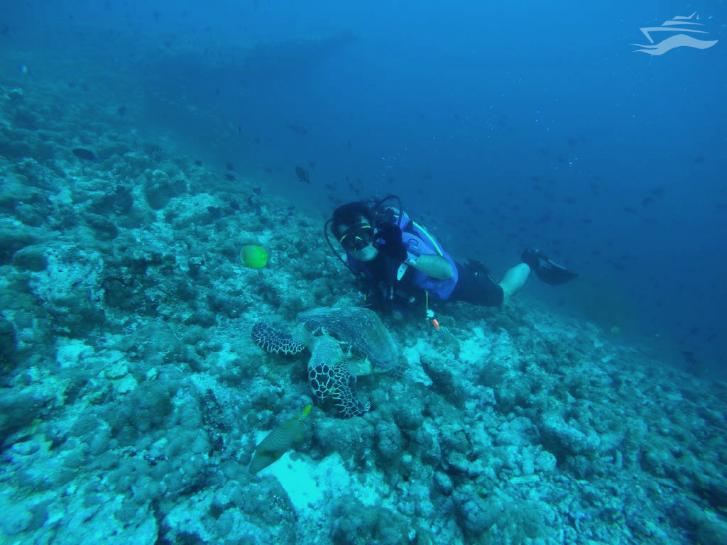 Nadar Tortugas Maldivas