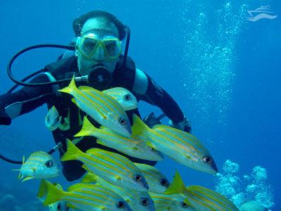 Buceo en Maldivas. Yates Maldivas
