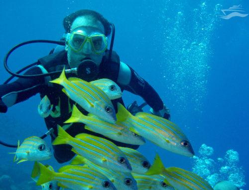 Los animales submarinos de Maldivas