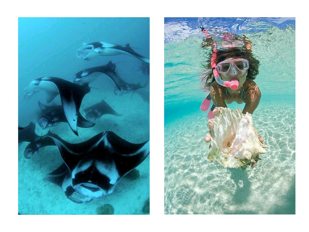 Fondo marino. Yates Maldivas